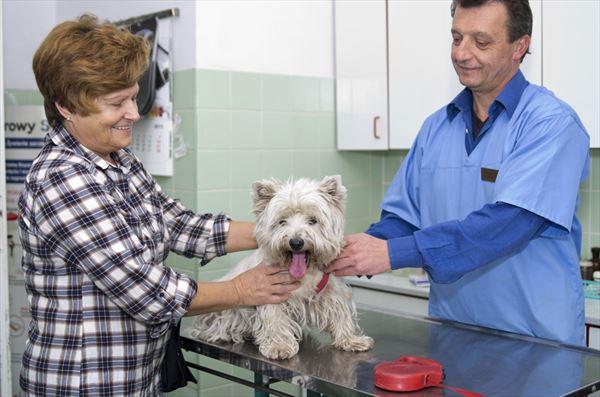 leczenie psów