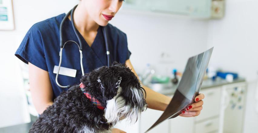 Jak leczyć dysplazję u psa?