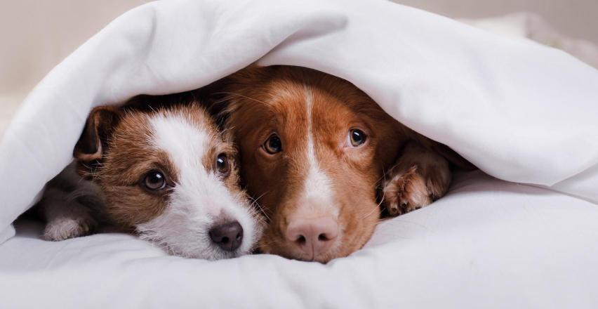 Parwowiroza u psa. Czy psi tyfus jest groźny?