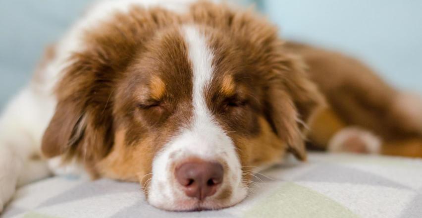 Co poradzić na zapalenie spojówek u psa?