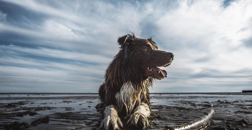 Jak znaleźć najlepszy GPS dla psa?