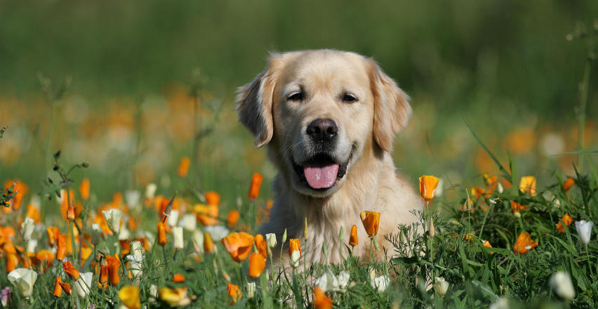 Kleszcz u psa – jak go rozpoznać?