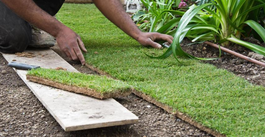 Jak wybrać i układać trawę z rolki?