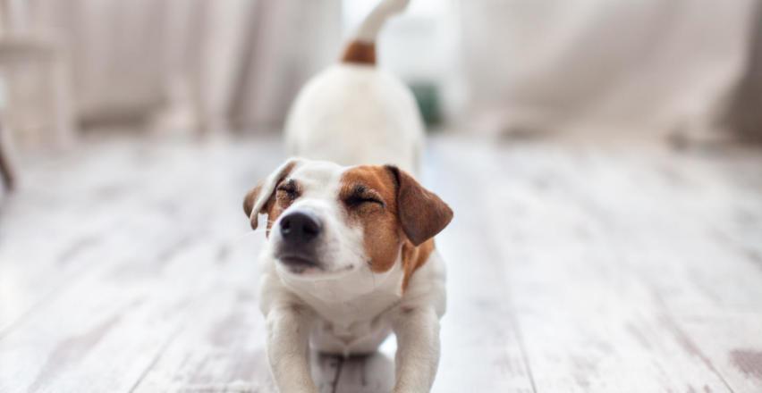 Szczepienie psa – na co warto zaszczepić swojego pupila?