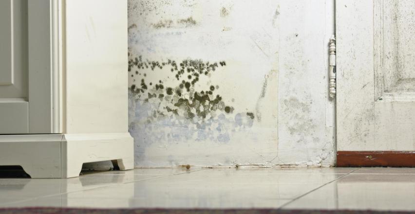 Jak szybko i skutecznie usunąć wilgoć z budynku?