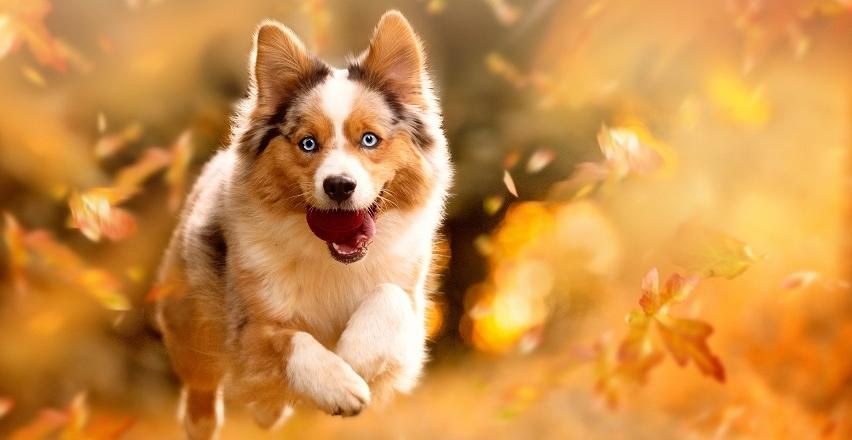 Jak opiekować się psem jesienią?