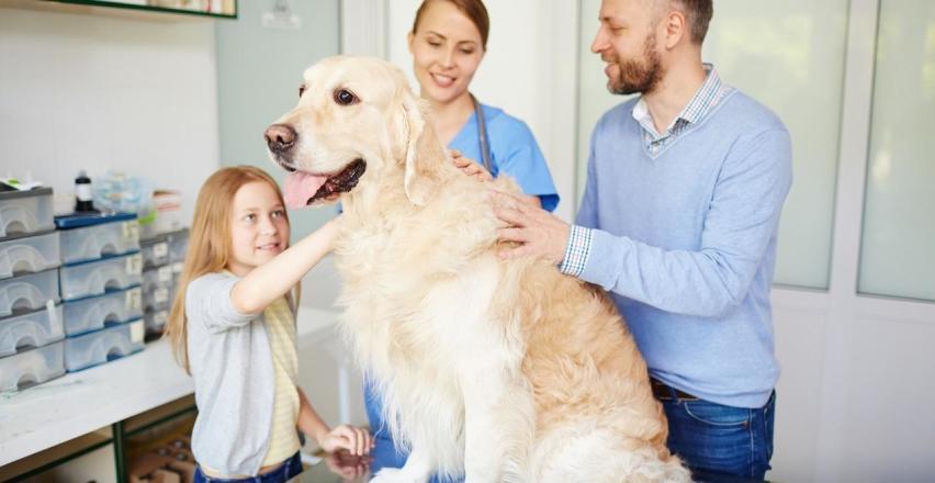 Jak przygotować psa na wizytę w przychodni weterynaryjnej?