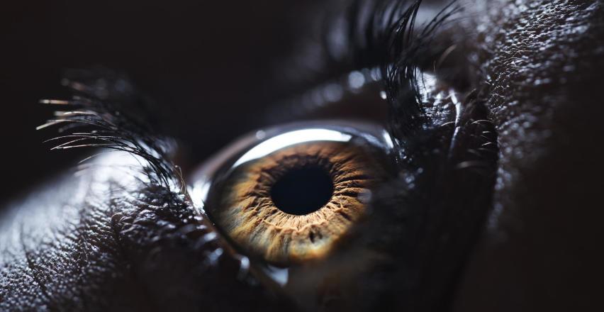 Kiedy wybrać się do okulisty?