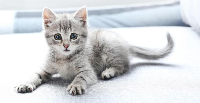 Jak leczyć koci katar?