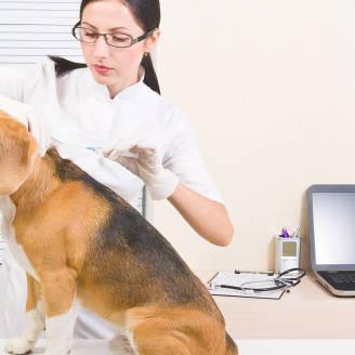 Zadbaj o swojego pupila z pomocą lecznicy weterynaryjnej Wawer!