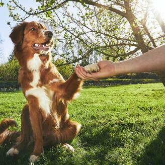 Jak szkolić psa? Czego unikać podczas treningów?