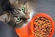 Jaka karma dla kota jest najlepsza?