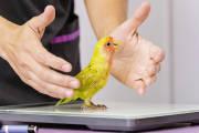 Lecznica dla ssaków dużych i małych oraz ptaków