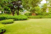 Nie tylko uspokajająca zieleń. Niewidoczne dla oka funkcje trawnika