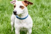Najlepsze sprawdzone metody na ochronę psa przed kleszczami