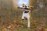Jakie rasy psów są najlepsze dla aktywnych osób?