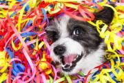 Jak uspokoić psa w Sylwestra?